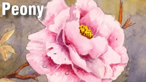 how to paint peony watercolour