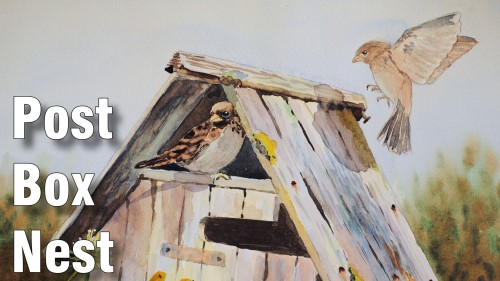 how to paint post box nest watercolour