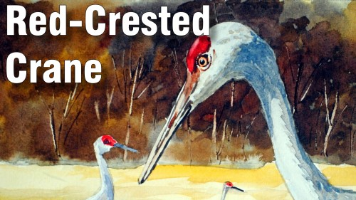 how to paint red crested crane watercolour