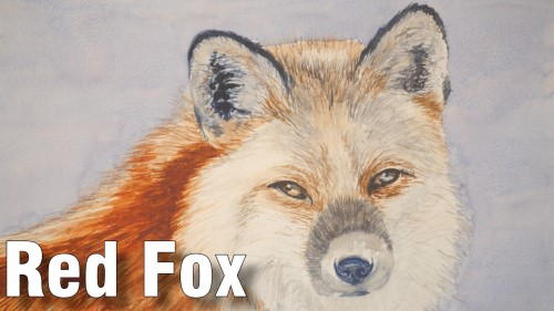 how to paint a red fox watercolour