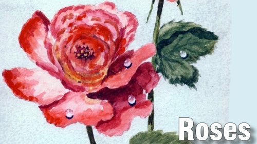 how to paint roses watercolour