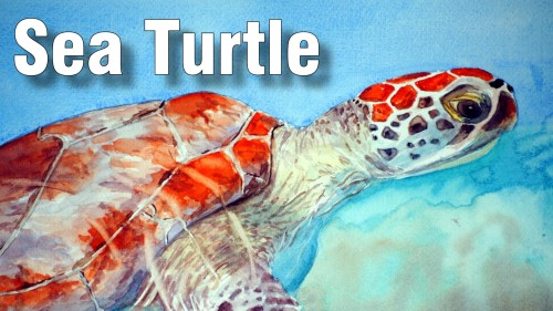 how to paint sea turtle watercolour