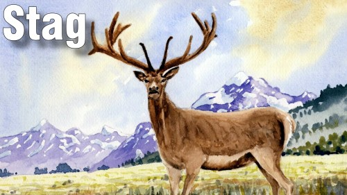 how to paint stag watercolour